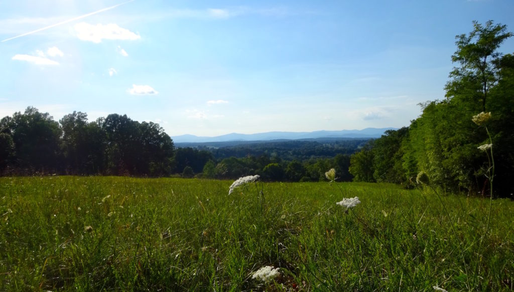 The tranquil foothills of Virginia's Blue Ridge, viewed from Orange. Our Virginia Aromatics studio is nearby.